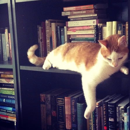 Cat on the middle shelf of a bookcase.